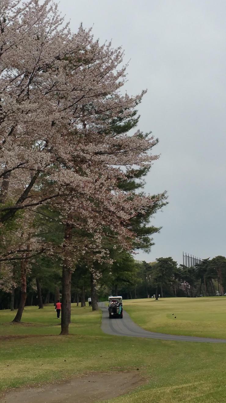 まだ桜が咲いていました